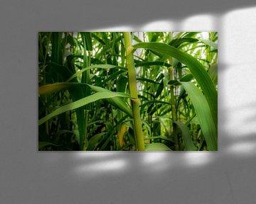 Bamboe von Kaj Hendriks
