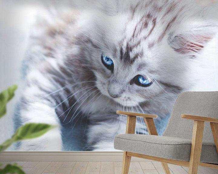 Beispiel fototapete: Engelsaugen – Maine-Coon-Katze von Kimberly de Pater