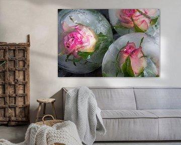 Rosenblüten in Eis von Marc Heiligenstein