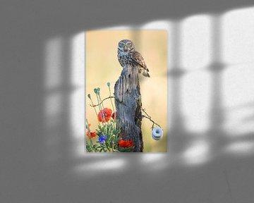 Steenuil op weidepaal met klaprozen en korenbloem von Kris Hermans