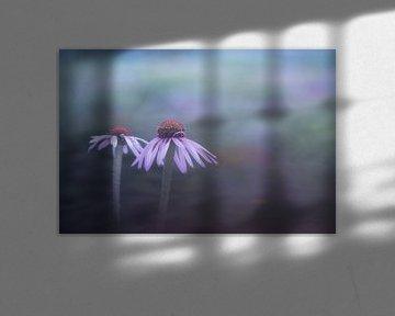 Blume von Francis Dost