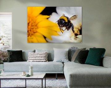 Hummeln fliegen nächste gelbe Blume von Marcel Krol