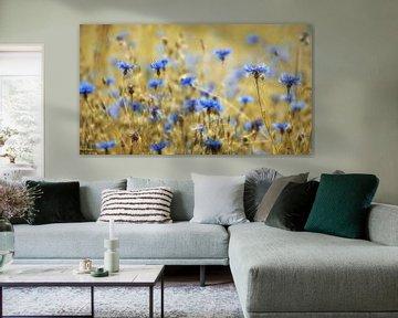 Korenbloemen von Martin Podt