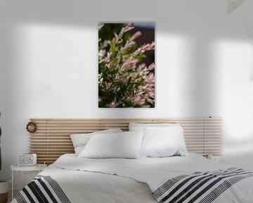 Blühende Japanische Weide mit pelzigen Blättern von Fotografiecor .nl