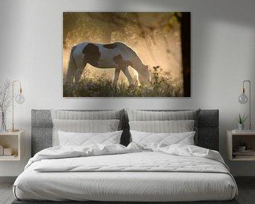 paard in de wei sur miranda  Leenheer