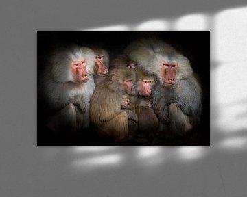 Bavianen observeren gebeurtenissen, een groepsportret van Suzan Baars