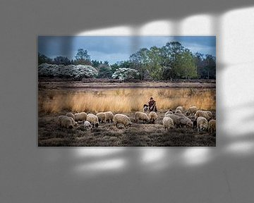 De schaapherder van TH Hoang