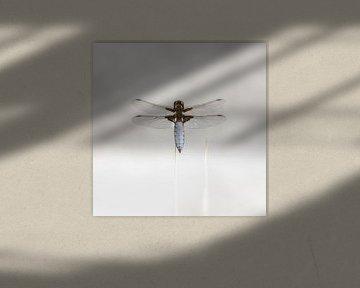 Libelle van Götwin van Bergen
