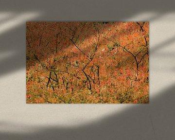 Herfstkleuren von Myrte Wilms
