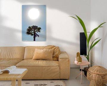 Zonnige palmboom sur Ron Steens