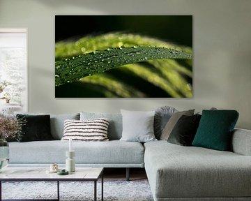 Regentropfen von Gabi Siebenhühner