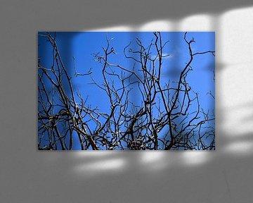 Dorre takken blauwe lucht van Ron Steens