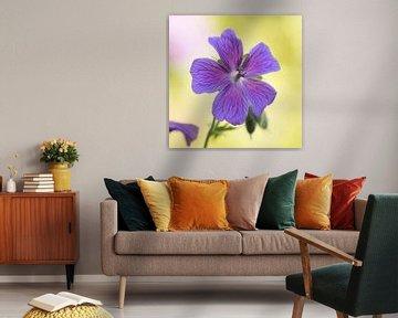Blauwe geranium von Barbara Brolsma