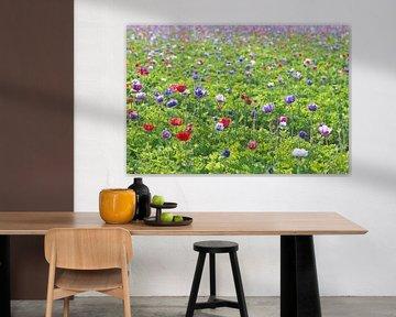 Veld vol anemonen von Barbara Brolsma