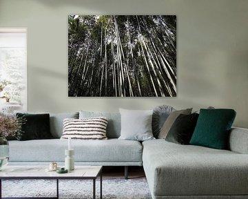 Bamboe Bos von Kim Koppenol