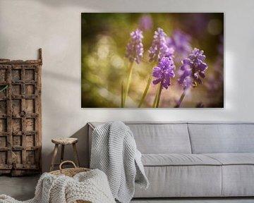 Wonderful in purple