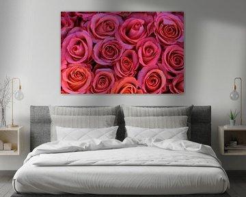 Rosen von Ron Steens