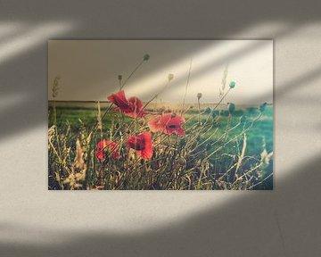 Creatief canvas van klaprozen van Fotografiecor .nl