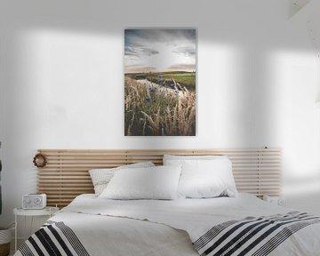 Blauwe korenbloemen in het veld van Fotografiecor .nl