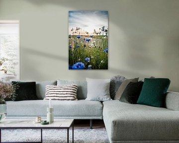 Stralende korenbloemen van Fotografiecor .nl