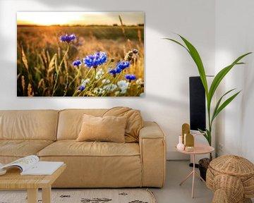 Kornblumen im Sonnenlicht von Fotografiecor .nl