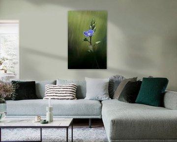 Field flower van Olivier Chattlain