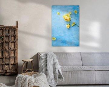 Gele Rozen, roos op een blauwe achtergrond sur BeeldigBeeld Food & Lifestyle