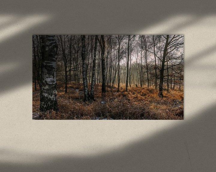 Sfeerimpressie: Berkenbomen van Davy Sleijster