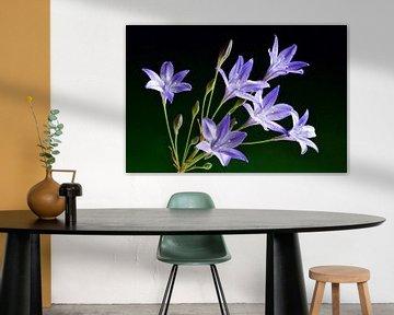 Bermbloemen / Wilde bloemen