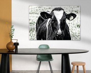 Portret van een zwartbonte koe