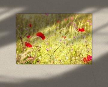 Blumenfeld mit Mohnblumen von Jessica Berendsen