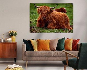 Schotse Hooglander stier von Ineke Huizing
