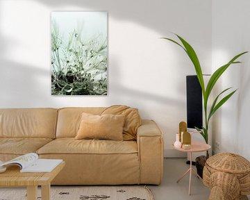Pusteblume nach dem Regen - grün von Christine Nöhmeier