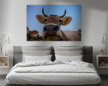 Portret van een Zwitserse koe  von Kaj Hendriks