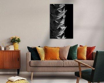 Stam van een palmboom in zwart-wit von Anne van de Beek