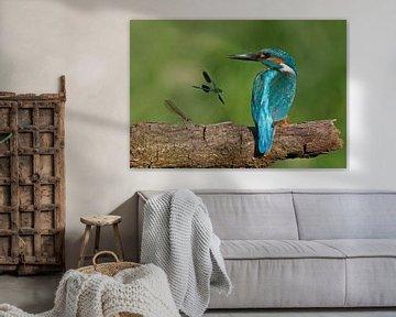 Ijsvogel met juffers von Gejo Wassink