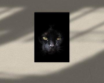 Gesicht der schwarzen Katze mit gelb / grünen Augen vor einem dunklen Hintergrund von Hans Post