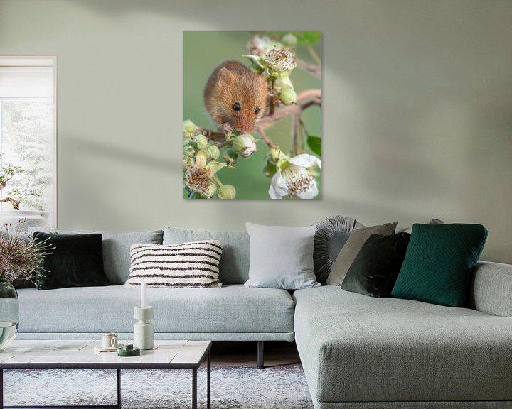 Sfeerimpressie: Dwergmuis op een braamstruik van Nature in Stock