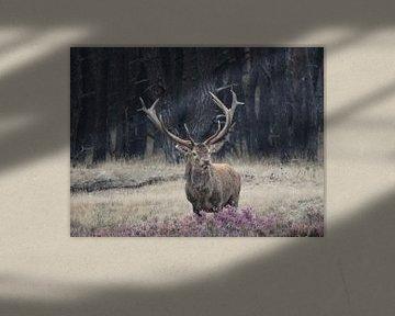 Hert in bronsttijd van El'amour Fotografie