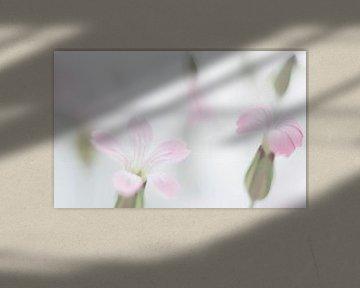 Roze koekruid von Minie Drost