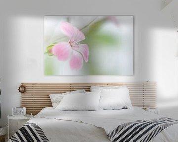 Single roze koekruid von Minie Drost