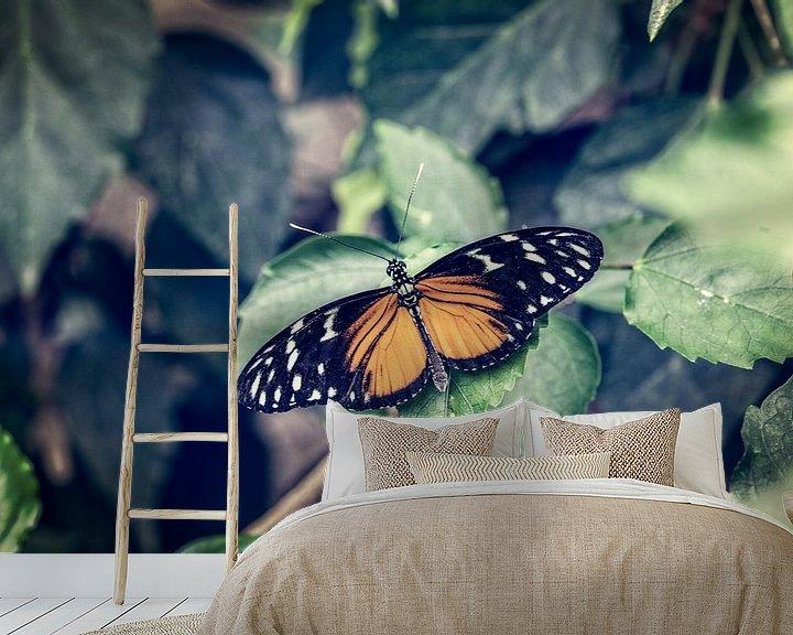 Beispiel fototapete: Tiger Longwing Butterfly von Tim Abeln