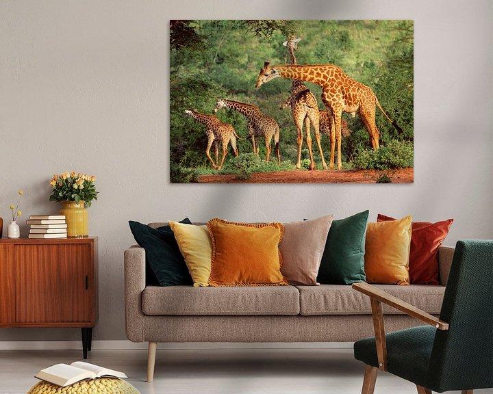 Sfeerimpressie: Groep giraffen in Kenia van Nature in Stock
