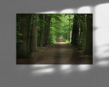 Pad in het bos von Nienke van den Brink