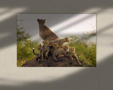 Moeder Jachtluipaard (Acinonyx jubatus) met zes welpen op de uitkijk op een termietenheuvel van Nature in Stock