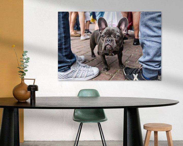 Beispiel: Franse bulldog von jan van de ven