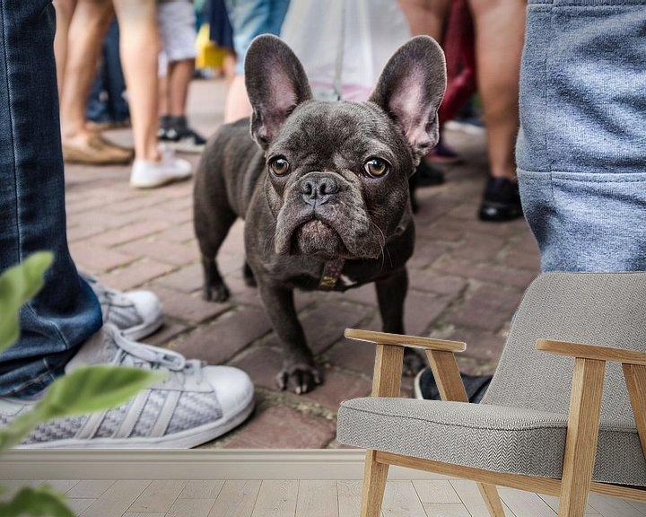 Beispiel fototapete: Franse bulldog von jan van de ven