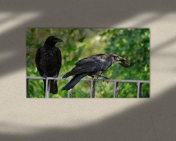 Krähen im Alsterpark