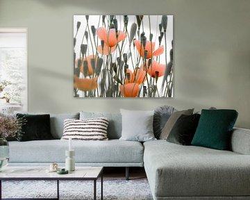 Oranje klaprozen von Minie Drost