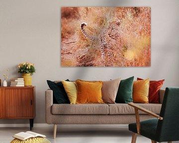 Luipaard poseert bij zonsondergang van Lotje Hondius
